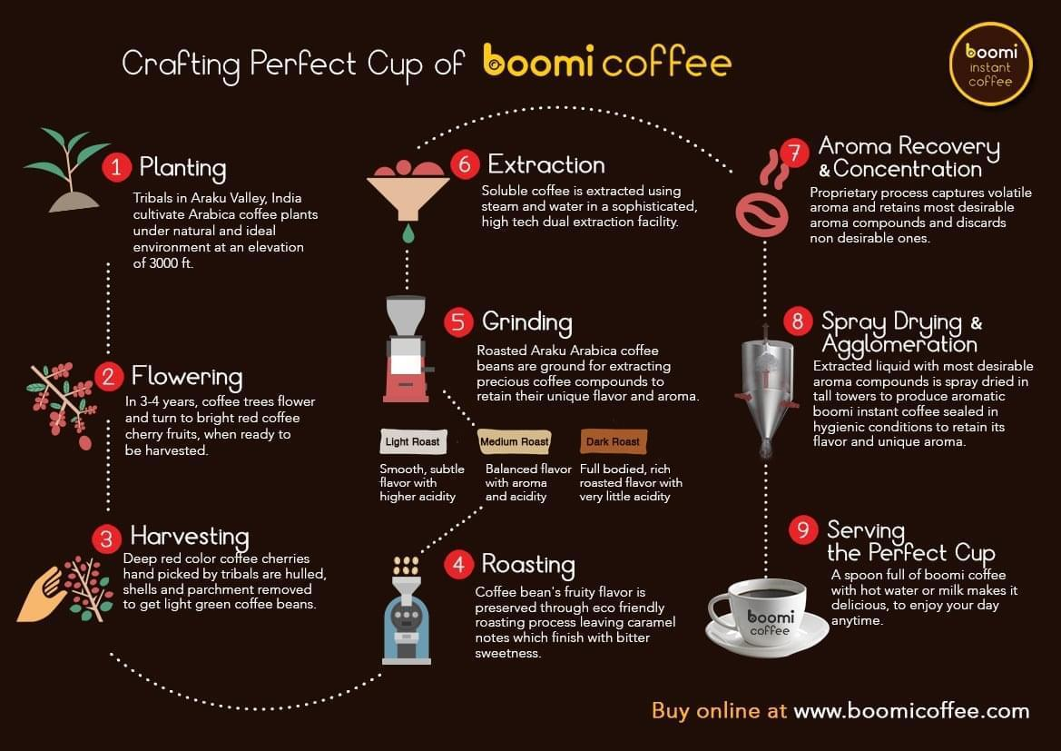 Boomi Coffee Infographics - Crafting Perfect Cup